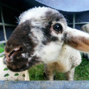 Schule & Kita: Auf zu neuen Schafen!