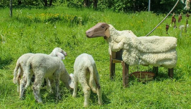 Auf zu neuen Schafen!