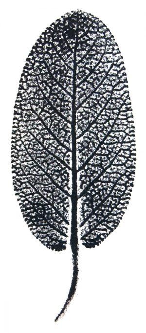 Mitmachen_Pflanzendruck